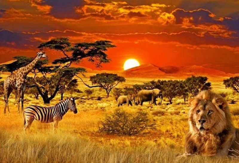 Интересные факты про Африку.