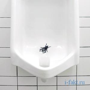 Туалетная муха