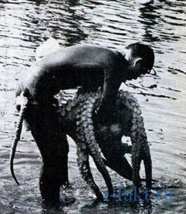 octopuswrestling