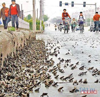 Дождь из лягушек в Китае