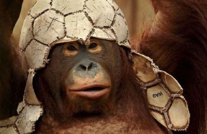 Легенда о черной повязке или как советский футболист убил обезьяну вратаря