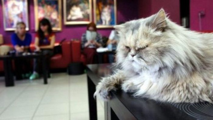Коты в Эрмитаже