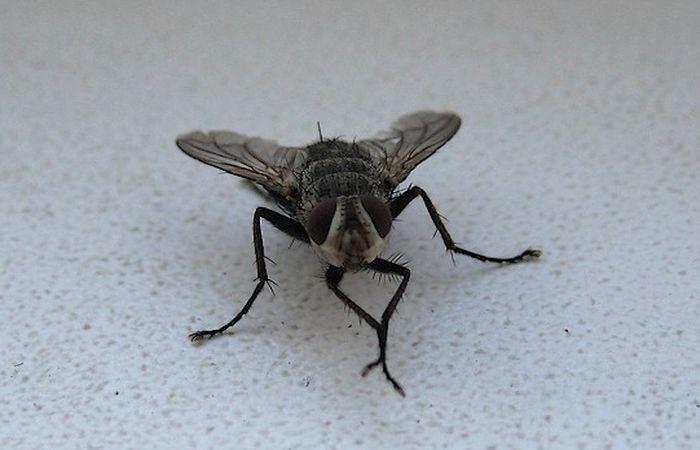 Зачем муха умывается