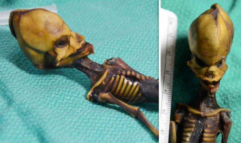 Скелет из Атакамы