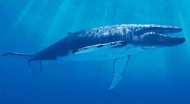 Интересные факты о китах.