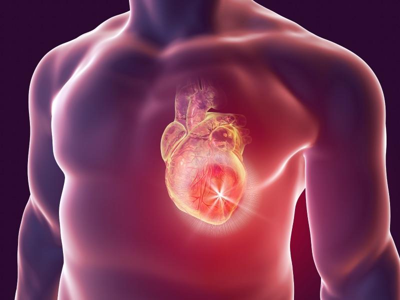 Интересные факты о сердце человека.