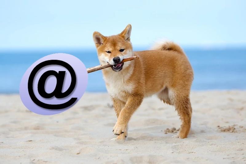 Как появилась собака в электронной почте.