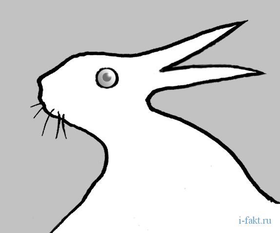 требовательности картинка на особенности восприятия заяц утка гурцкая иногда