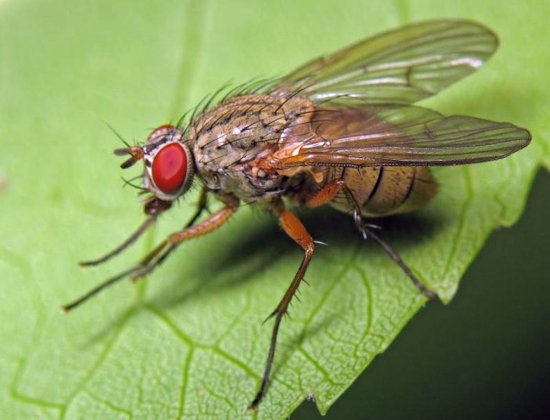 Интересные факты про мух.