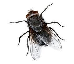 Интересные факты про мух 2