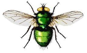 Интересные факты про мух 4