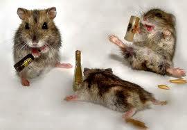 Интересные факты про алкоголизм у животных