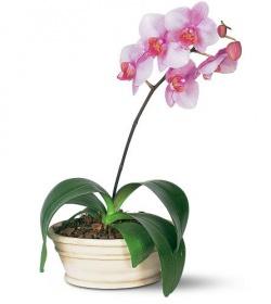 Интересные факты об орхидеях 1