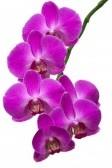 Интересные факты об орхидеях 2