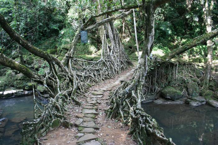 Чудеса мира - живые мосты 1