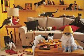 Загадка про кошек в комнате