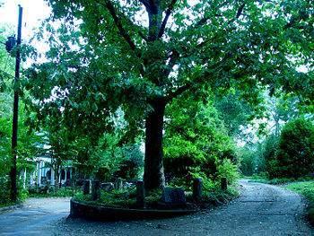 Какой дуб владеет собственной землей