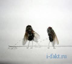 Загадка про мух