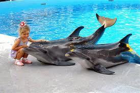 Интересные факты о дельфинах 3