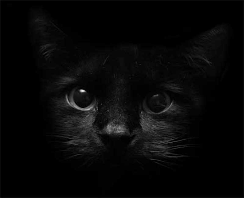 Факты и суеверия про черную кошку.