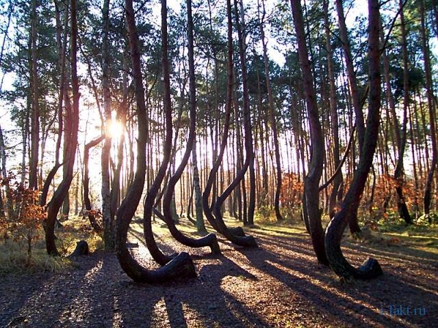 Тайны Кривого леса 1