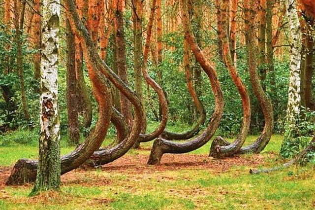 Тайны Кривого леса 2