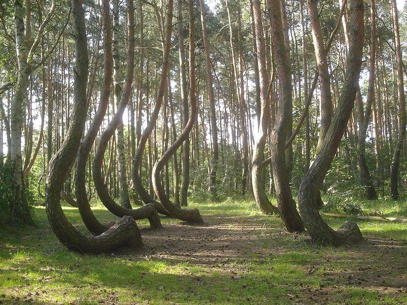 Тайны Кривого леса 9