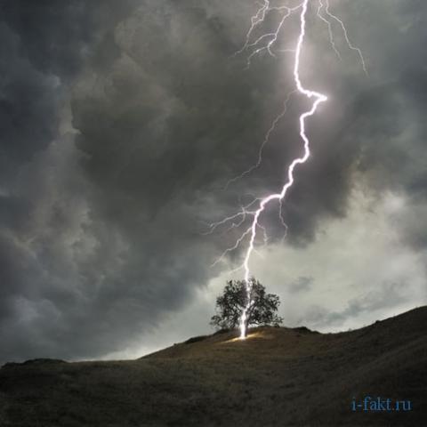 В какие деревья чаще ударяет молния?