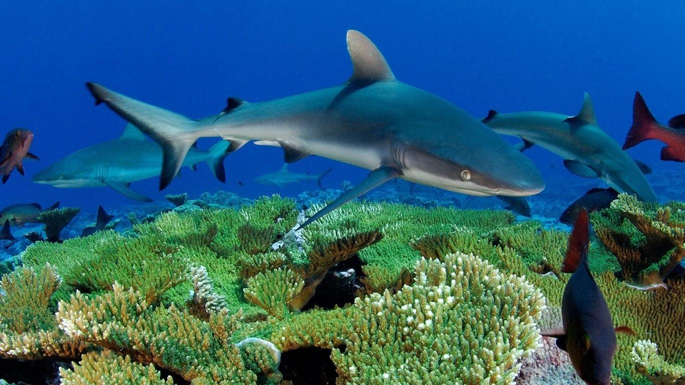 Рекордсмены морских глубин