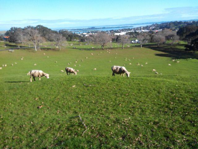 Интересные факты о городе Окленд, Новая Зеландия 3