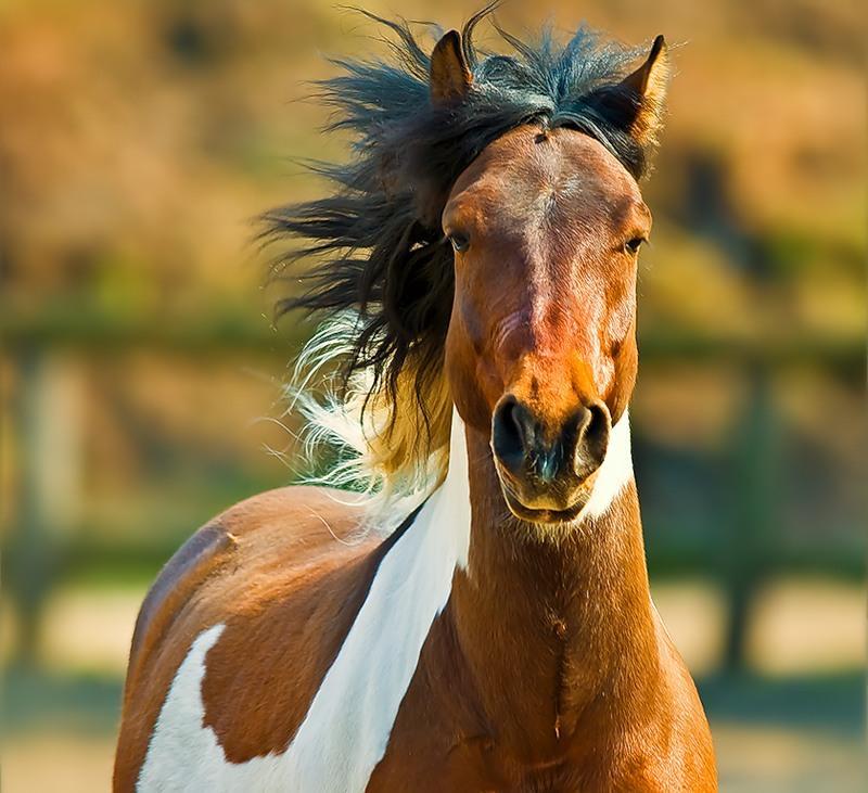 Интересные факты про лошадей