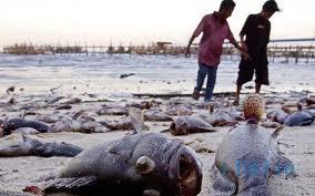 Рыбный дождь в Гандурасе