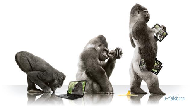 Интересные факты о Gorilla Glass