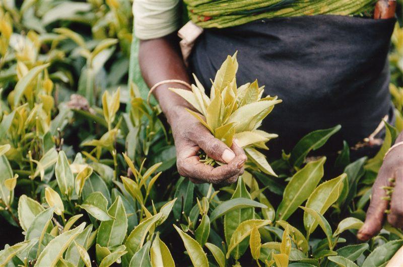 """Что означает """"Fair Trade""""  5"""