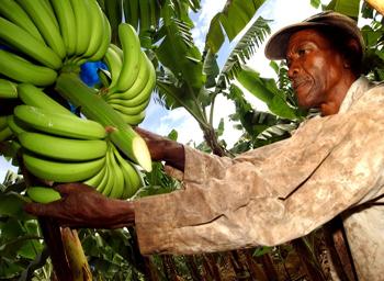 """Что означает """"Fair Trade""""  4"""
