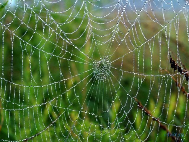 Интересные факты про паутину