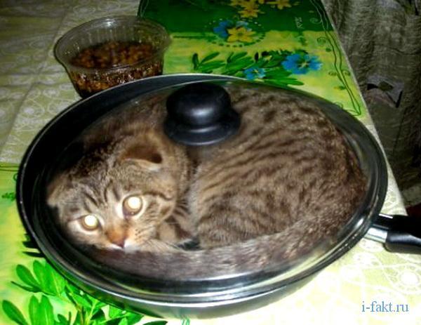 Блюдо из кошки