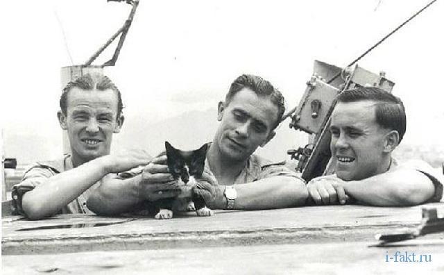 Британский военный  герой - кот Сайман