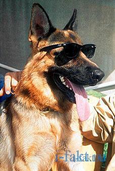 Самый богатый пес в мире