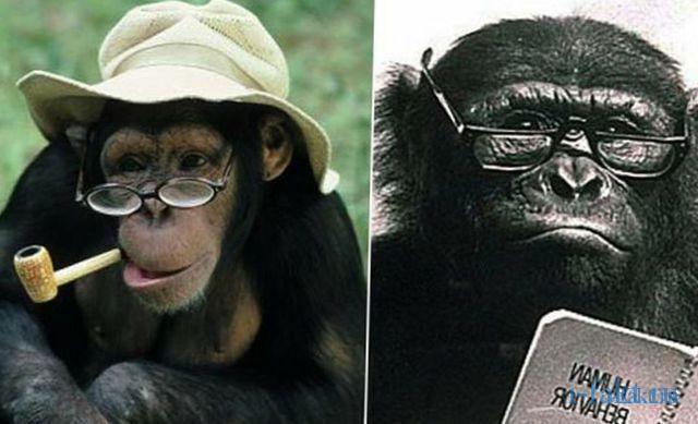 Из обезьяны в человека