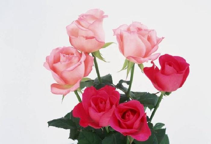 Почему нельзя дарить четное колличество цветов