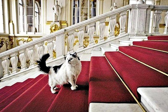 Что делают коты в Эрмитаже
