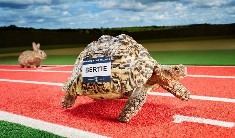 Самая быстрая черепаха