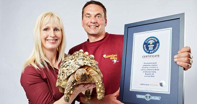Берти - самая скоростная черепаха