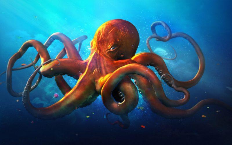 Интересные факты об осминогах