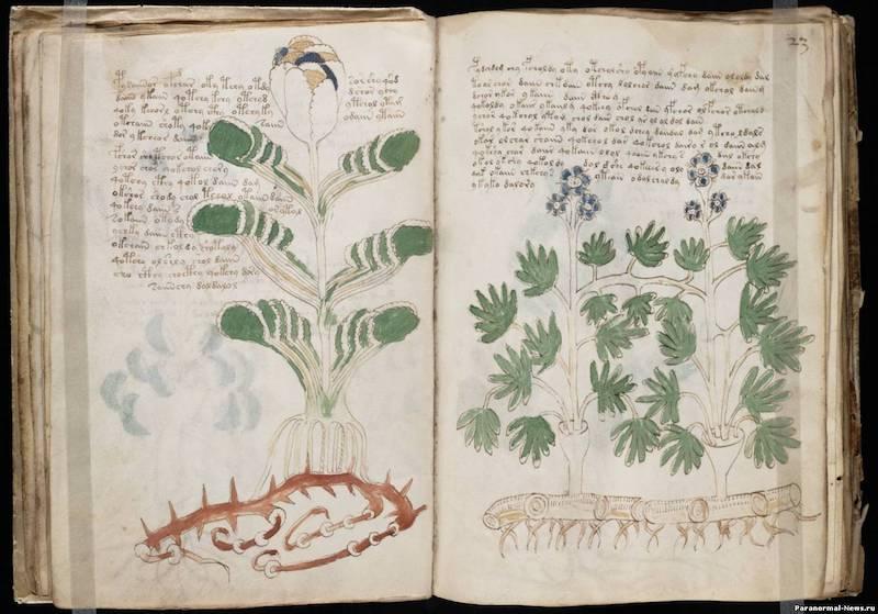 Манускрипт Войнича - самая загадочная рукопись в мире 2