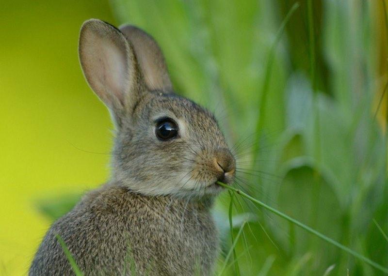 Интересные факты про зайцев.