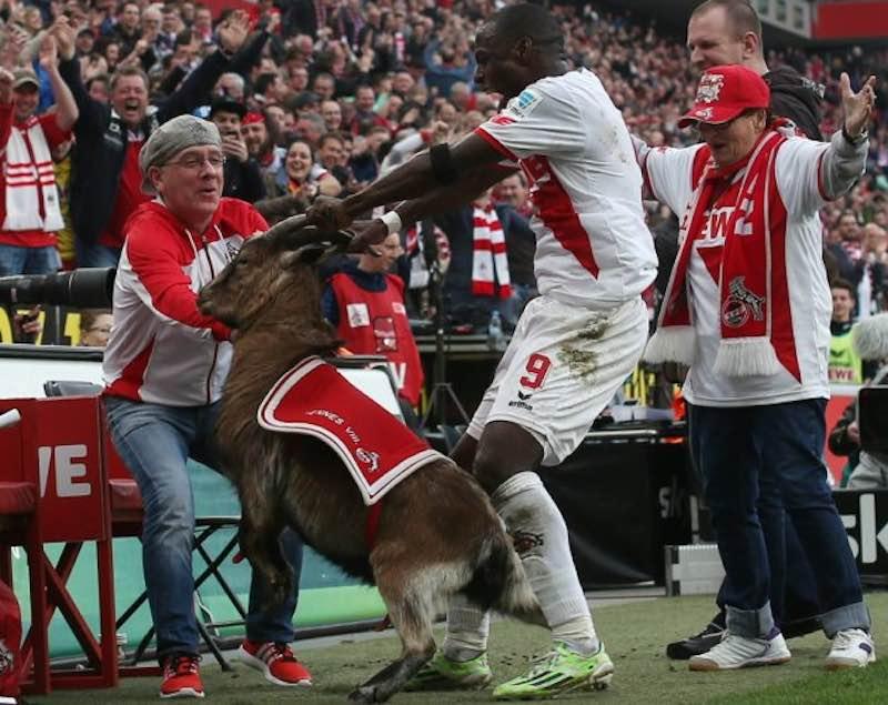Как козел Хеннес стал талисманом футбольной команды.