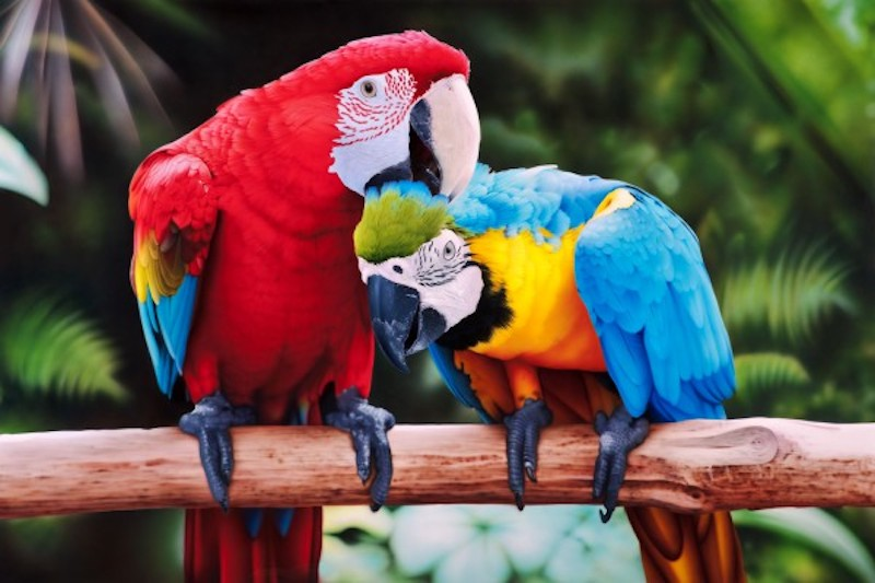 Интересные факты о попугаях.