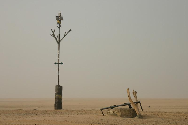 Памятник дереву Тенере.